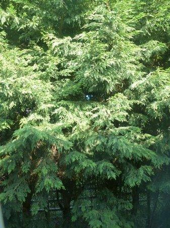 Premier Inn Runcorn Hotel: 'View' - cypresses
