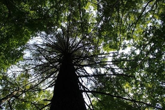 trees by joyce