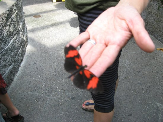 Pacific Science Center: Extended the finger and the butterfly just landed!