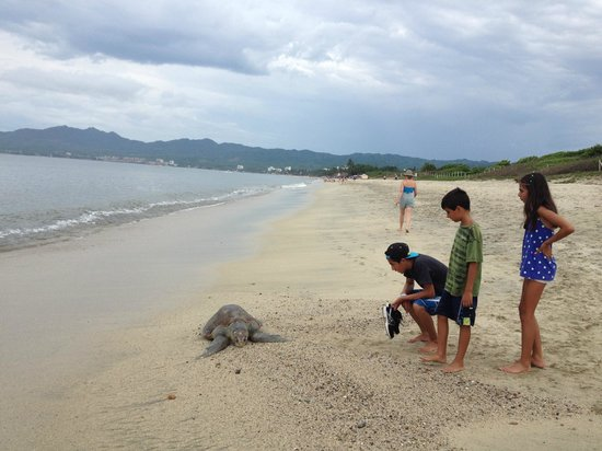 Hotel Riu Vallarta : Walk along beach towards Buceria, just after big hotels