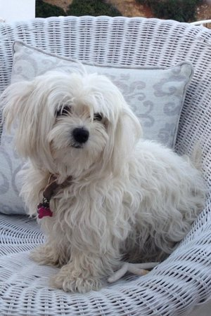 Levantes - Ios Boutique Hotel : The beautiful Rozi - the family's gorgeous dog