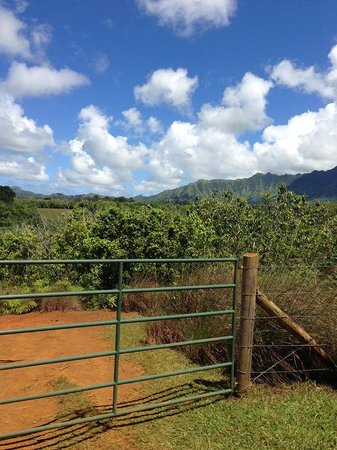 Princeville Ranch Adventures: Beautiful Princeville Ranch