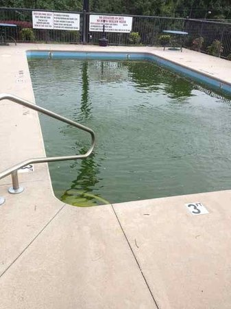 Days Inn Jonesville: Truly disgusting pool, overrun with algae.