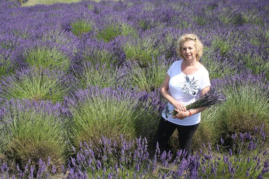 Cheryl's Northwest Tours LLC - Day Tours: Fragrent Lavender Fields