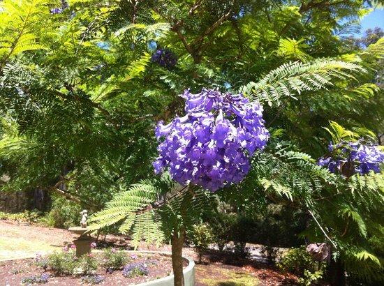 Emerald, أستراليا: Spring Blossoms