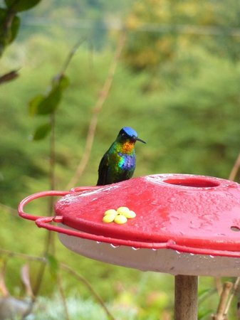 Mirador de Quetzales: Hummingbird station in front of the restaurant