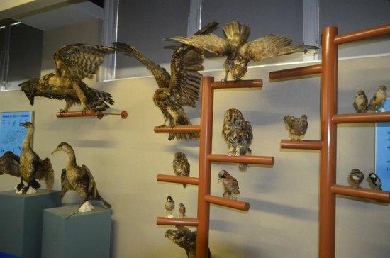 Michineoki Irago Crystal Port : 椰子の実博物館