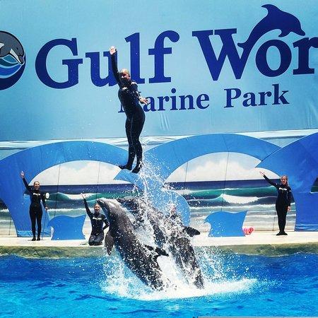 Gulf World Marine Park Coupons 2017 2018 Best Car Reviews