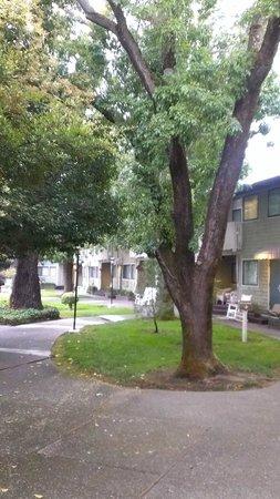 Best Western Plus Corte Madera Inn: courtyard2