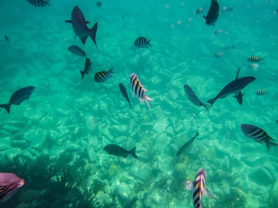 Lots of fish upon entering the water picture of snorkel for Lots of fish