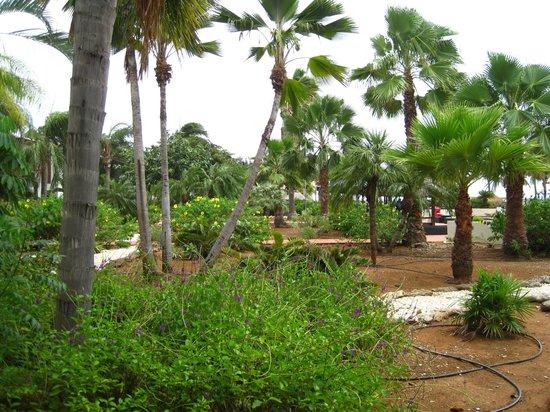 Plaza Resort Bonaire: View from patio