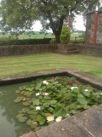 Heughmill Bed and Breakfast : Lilly pond