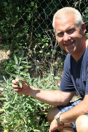 The Spice Lab: herbs growing at olive grove