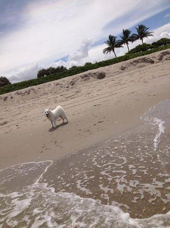 Jupiter Dog Beach: fun day