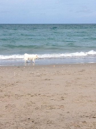 Jupiter Dog Beach: great day at the beach perfect place to bring ur dog
