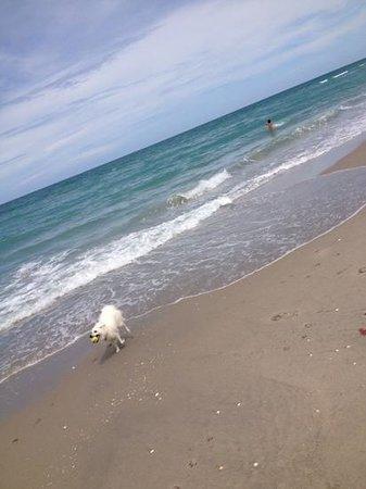 Jupiter Dog Beach: fun !!