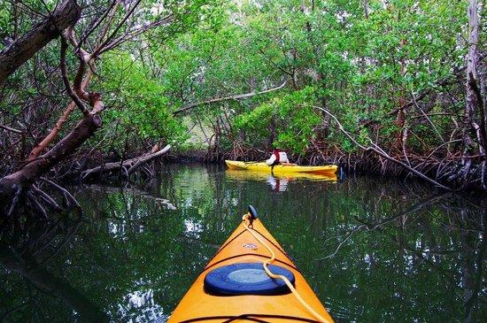 Captiva Kayak Company & Wildside Adventures : Mangrove Trail