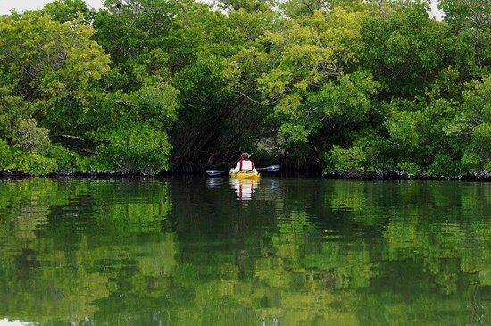 Captiva Kayak Company & Wildside Adventures : Entering Mangrove Trail
