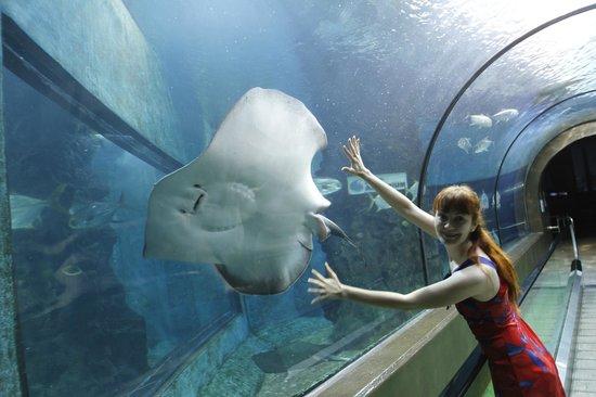 Amora Beach Resort: аквариум
