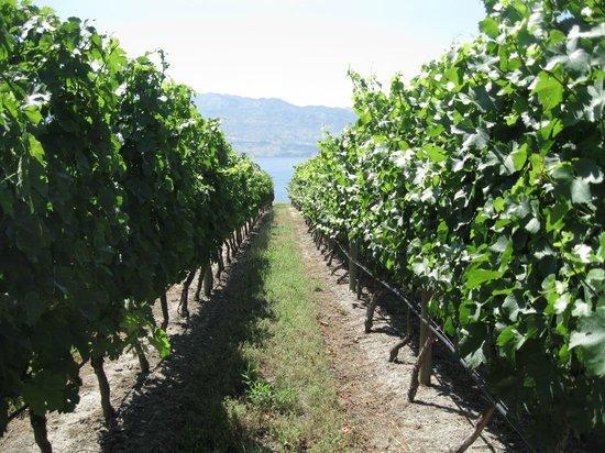 Experience Wine Tours : Quails Gate