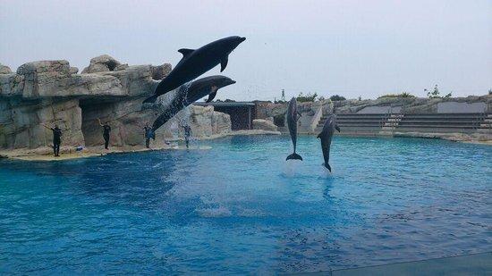 Riccione, Italy: spettacolo delfini..