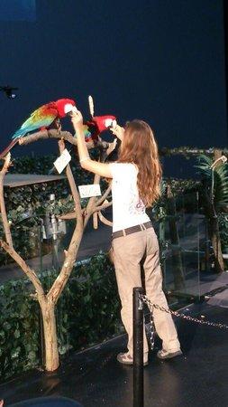 Riccione, Italy: spettacolo pappagalli...