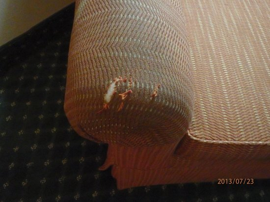 Comfort Inn & Suites: Filthy chair