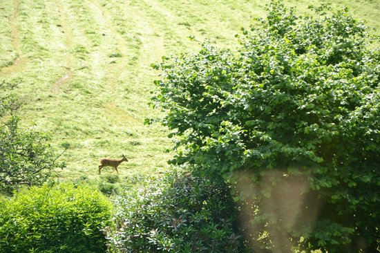 High Fold Guest House: You can see wild Roe deer from your room!