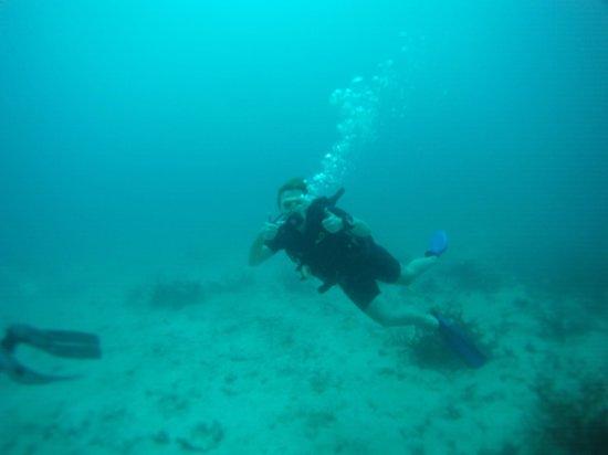 Sunshine Divers Resort: :)