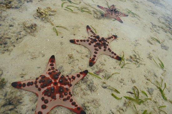 Pacific Lagoon Apartments: Starfish in lagoon