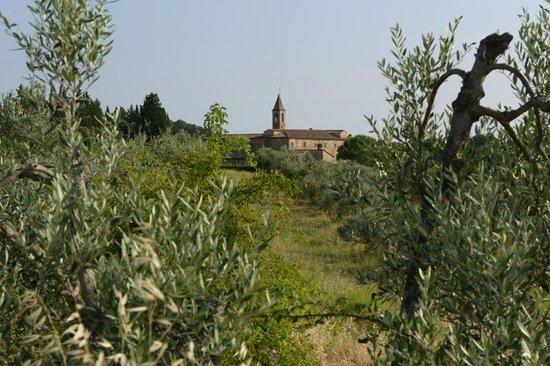 Santa Maria della Pace : Tra gli Ulivi (ma non si chiama Getsemani)