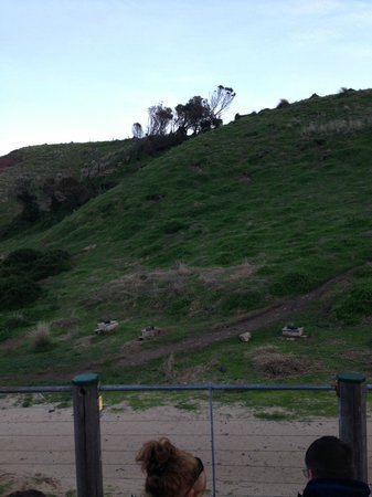 Phillip Island Nature Park: Phillip Island - some of the burrows were the penguins home