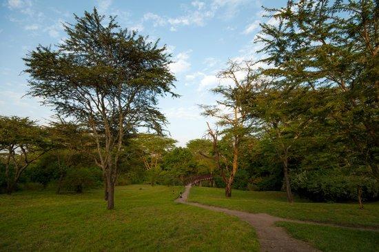 Leleshwa Camp: Camp territory