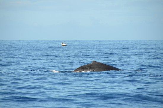 Le Grand Bleu : Baleine à bosse avant la plongée