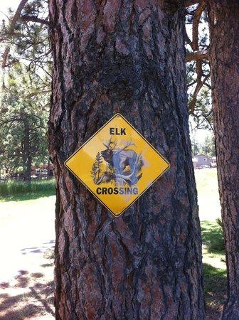 Evergreen Family Golf Center: Elk are prevalent