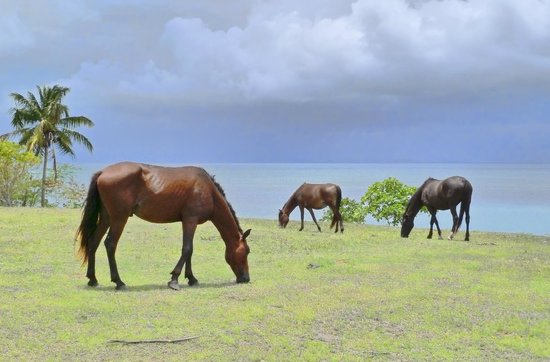 Sun Bay : Wild Horses of Vieques