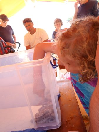 Ionian Discoveries : stroking an octopus!