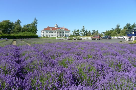 George Washington Inn: hotel with lavender