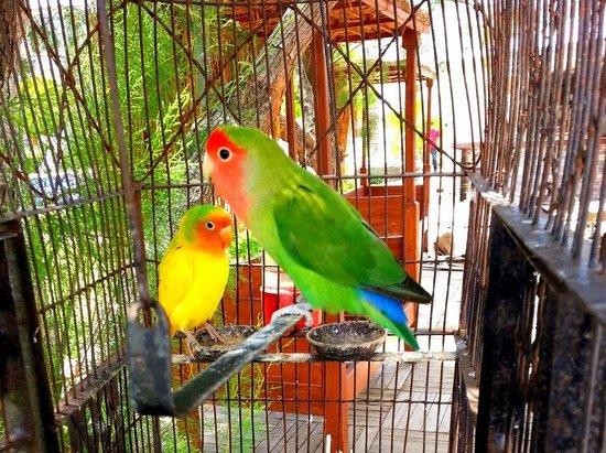 Cennet Park Hotel: otelin maskoları cennet papağanları