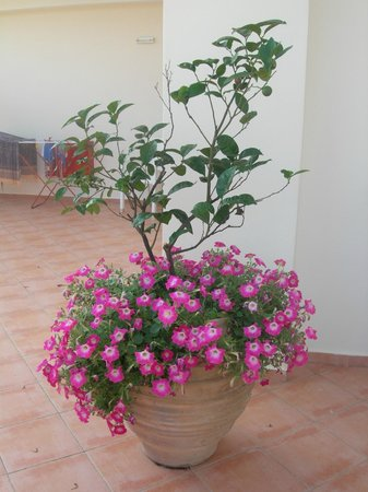Ionian Theoxenia Hotel: outside each room