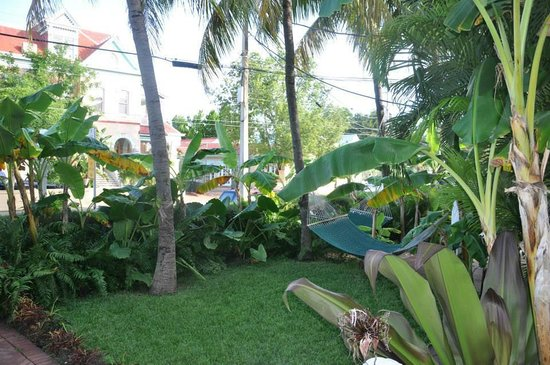 Southernmost Point Guest House: Hammocks and plant life