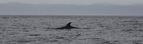Sea of Whales Adventures: Minke Whale