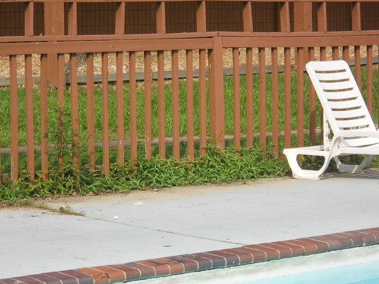 Motel 6 Hot Springs, AR : Poison Ivy in pool area