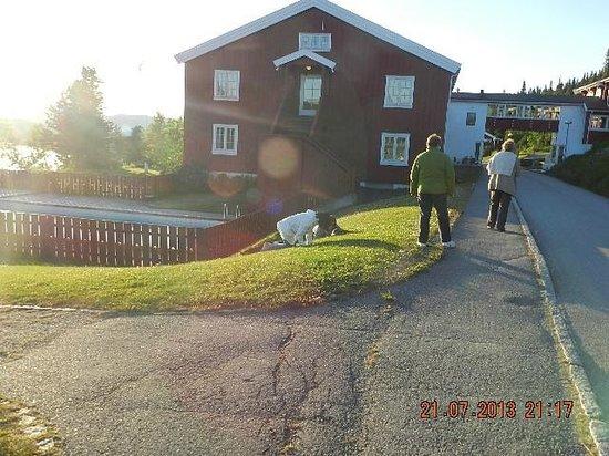 Gala Hogfjellshotel: photo prise de l entre