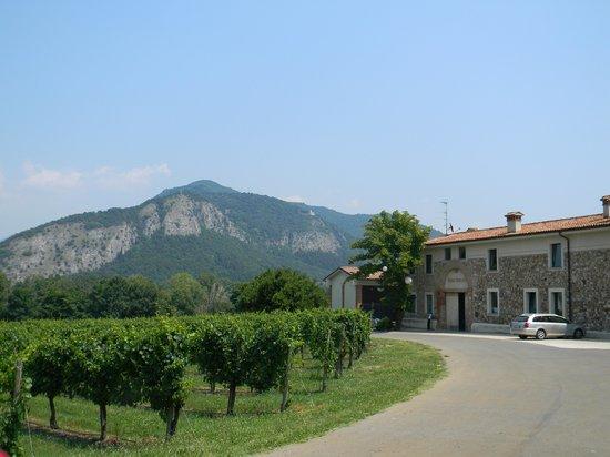 Bersi Serlini Franciacorta: I vitigni