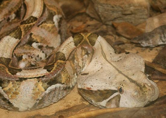 Meserani Snake Park : Snake at the park