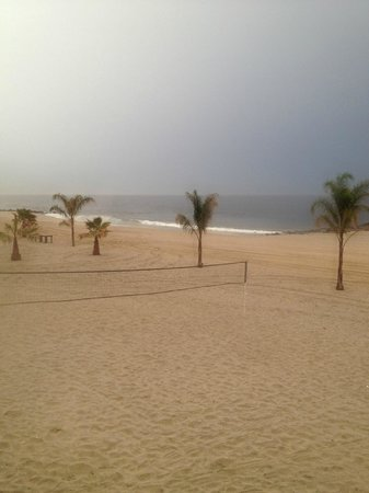 Ocean Place Resort & Spa: beach with the palm trees