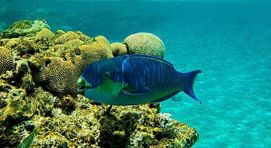 Movenpick Resort Taba : Кораллы на пляже.
