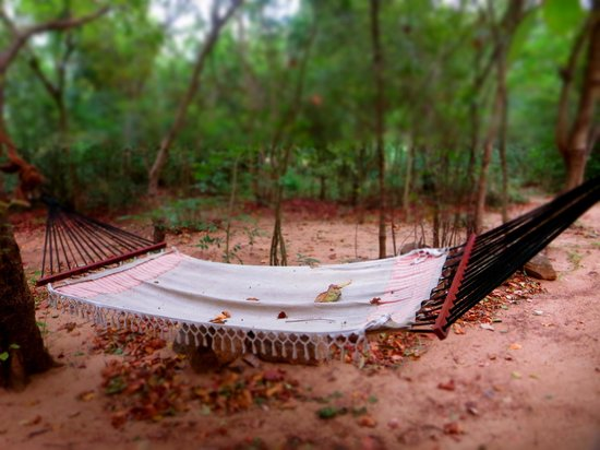 Galkadawala Forest Lodge: Miss those mornings lying on the hammock, reading a book.