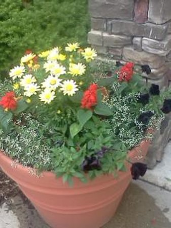 Extended Stay America - Chicago - Downers Grove : Sone of the outside flowers.